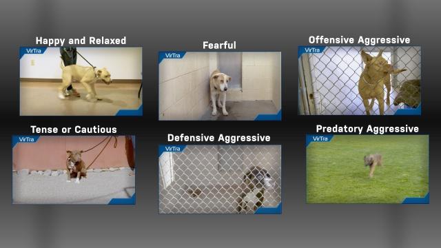 Basics of Behavior image.jpg